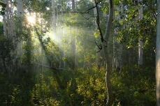 Nature_Landscapes_FoggyMoab