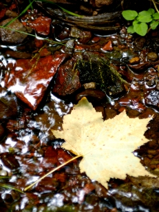 Nature_Landscapes_LeafStream