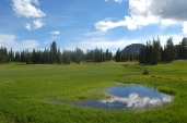 Nature_Landscapes_UintaMeadow