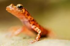 Nature_Wildlife_CaveSalamander
