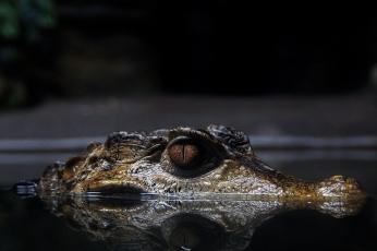 Nature_Wildlife_Crocodile